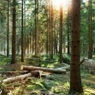 Skogsprodukter